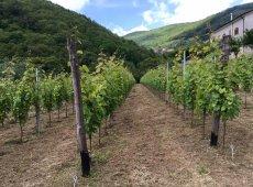 Tenuta San Francesco – Wine Tour