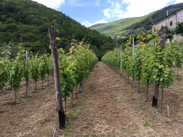 Tenuta San Francesco - Wine Tour