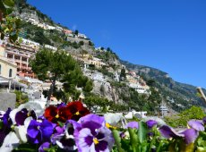 flowers-of-positano