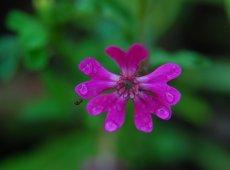 flower-of-gods