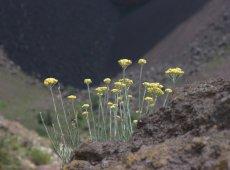 Vesuvius Flowers | Positano Car Service